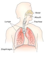 Muay Thai Breathing